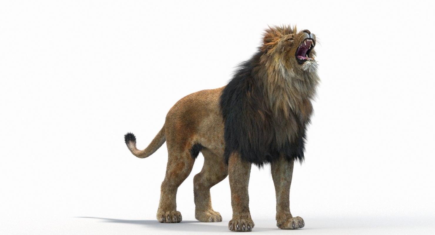 Lion_Roar_Animation0114.jpg1A6C9E48-EEA4-4F60-BF62-E37BCC2A3363Default-11.jpg