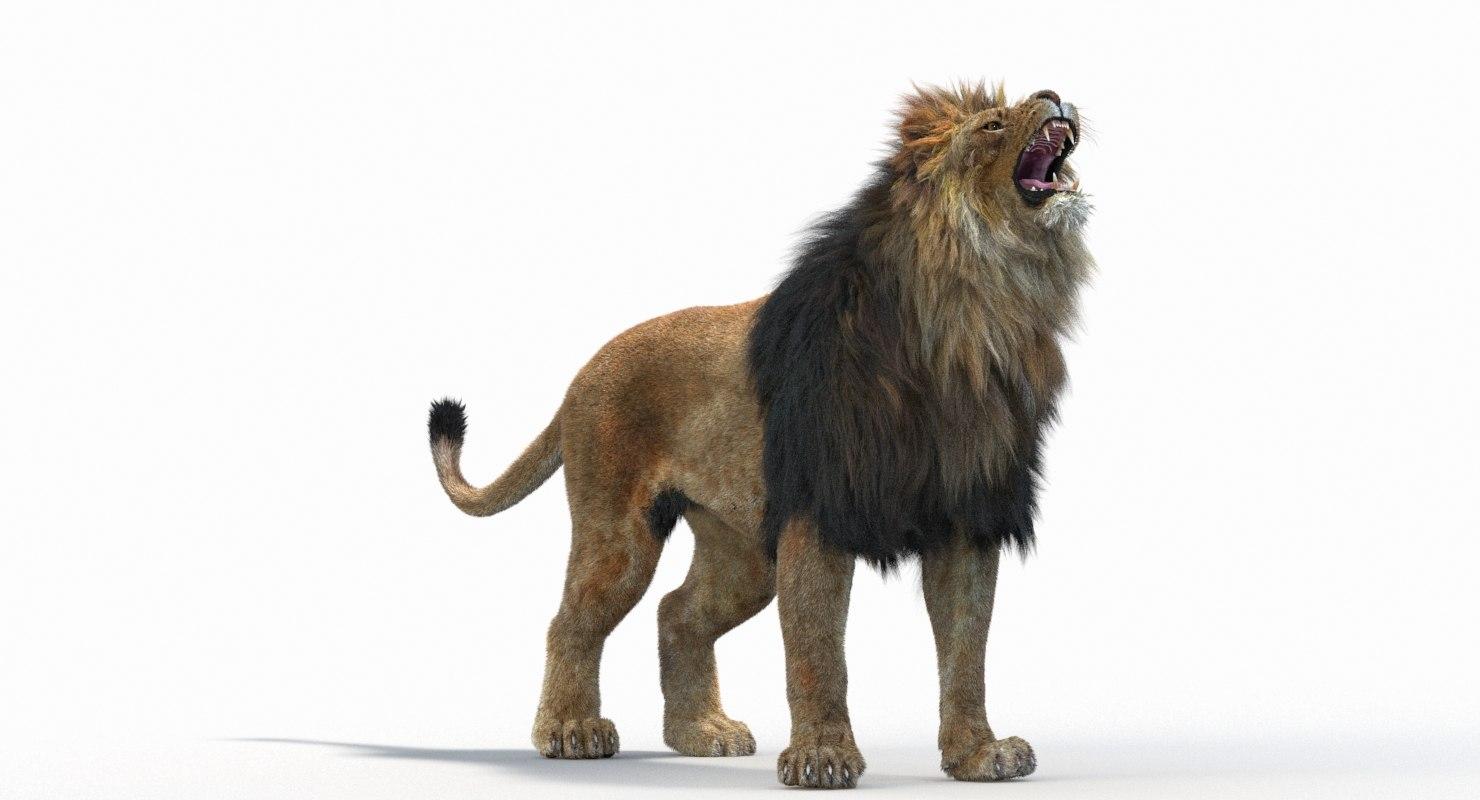 Lion_Roar_Animation0114.jpg1A6C9E48-EEA4-4F60-BF62-E37BCC2A3363Default-13.jpg