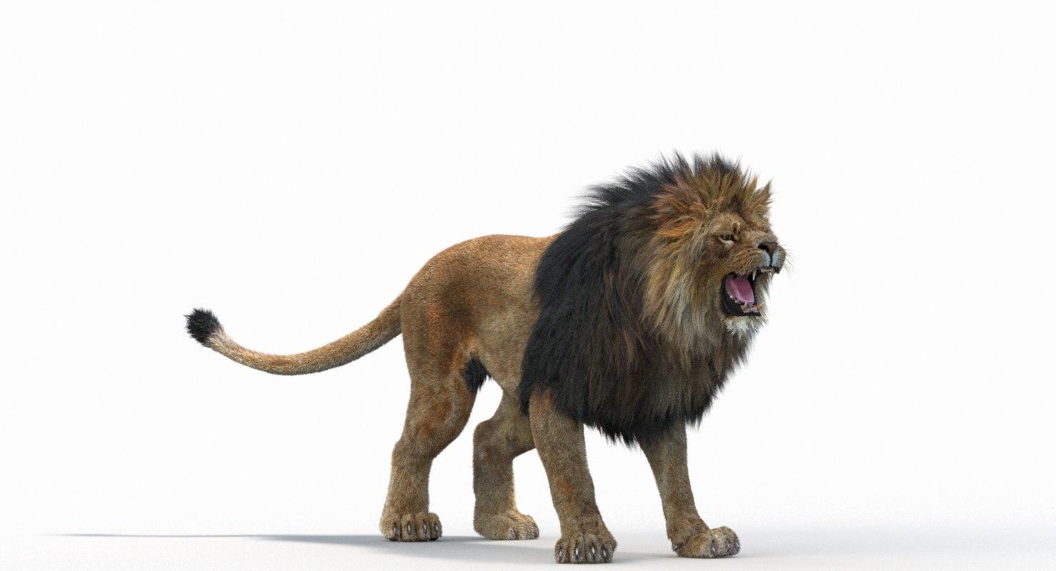 Lion_Roar_Animation0114.jpg1A6C9E48-EEA4-4F60-BF62-E37BCC2A3363Default-2.jpg