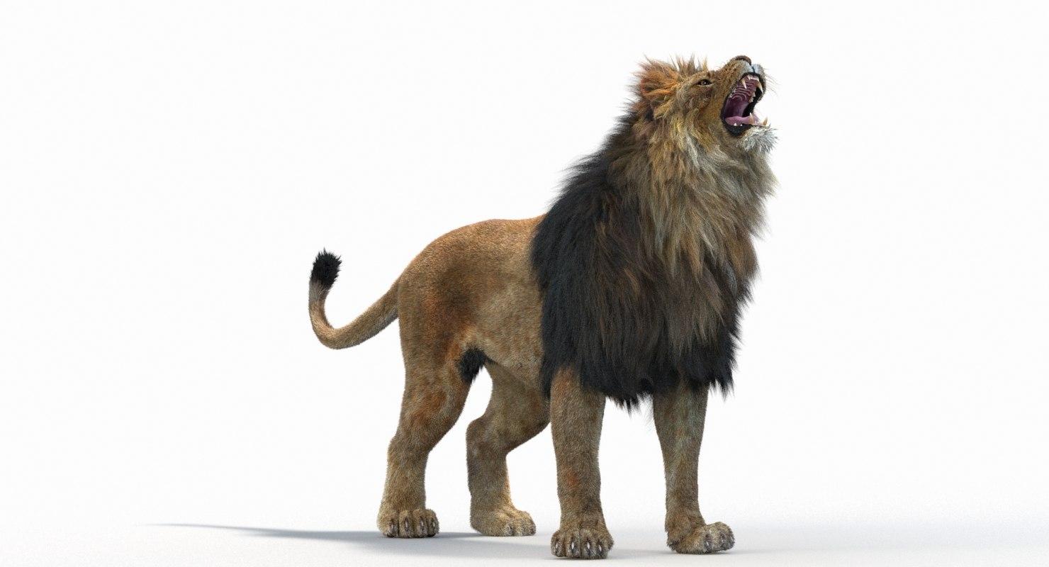 Lion_Roar_Animation0114.jpg1A6C9E48-EEA4-4F60-BF62-E37BCC2A3363Default-20.jpg