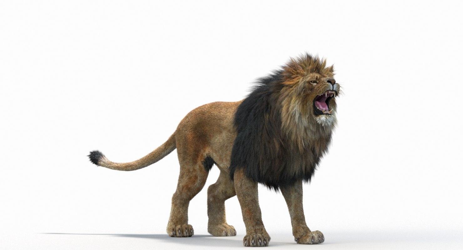Lion_Roar_Animation0114.jpg1A6C9E48-EEA4-4F60-BF62-E37BCC2A3363Default-3.jpg