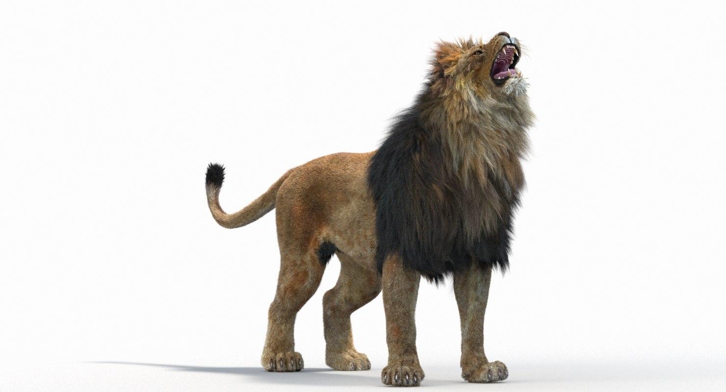 Lion_Roar_Animation0114.jpg1A6C9E48-EEA4-4F60-BF62-E37BCC2A3363Default-39.jpg