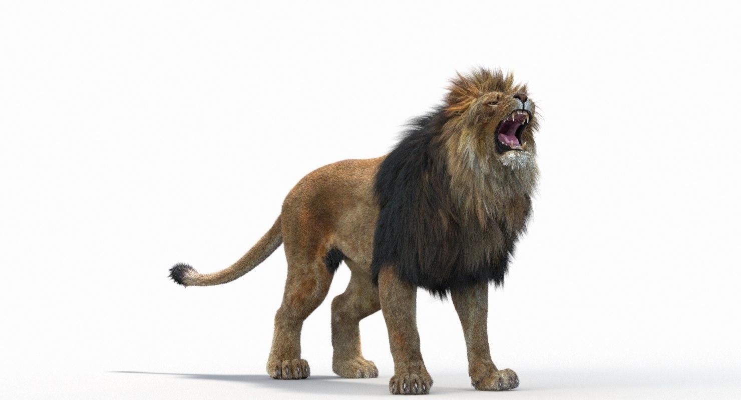 Lion_Roar_Animation0114.jpg1A6C9E48-EEA4-4F60-BF62-E37BCC2A3363Default-4.jpg
