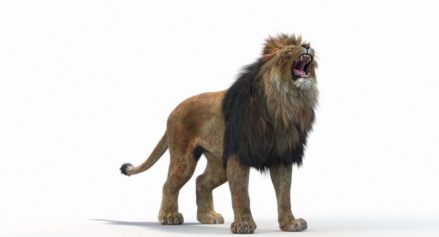 Lion_Roar_Animation0114.jpg1A6C9E48-EEA4-4F60-BF62-E37BCC2A3363Default-5.jpg