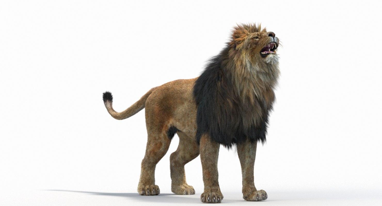 Lion_Roar_Animation0114.jpg1A6C9E48-EEA4-4F60-BF62-E37BCC2A3363Default-53.jpg