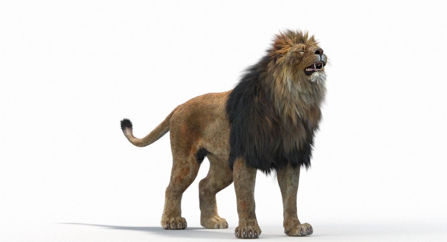Lion_Roar_Animation0114.jpg1A6C9E48-EEA4-4F60-BF62-E37BCC2A3363Default-57.jpg