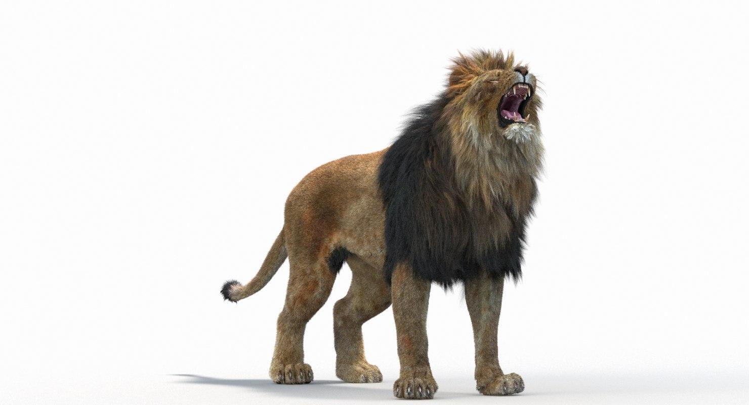 Lion_Roar_Animation0114.jpg1A6C9E48-EEA4-4F60-BF62-E37BCC2A3363Default-6.jpg