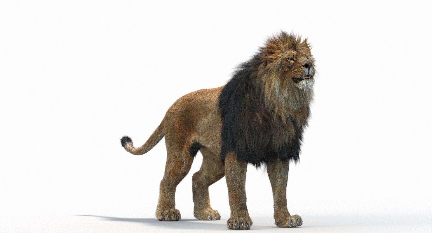 Lion_Roar_Animation0114.jpg1A6C9E48-EEA4-4F60-BF62-E37BCC2A3363Default-63.jpg