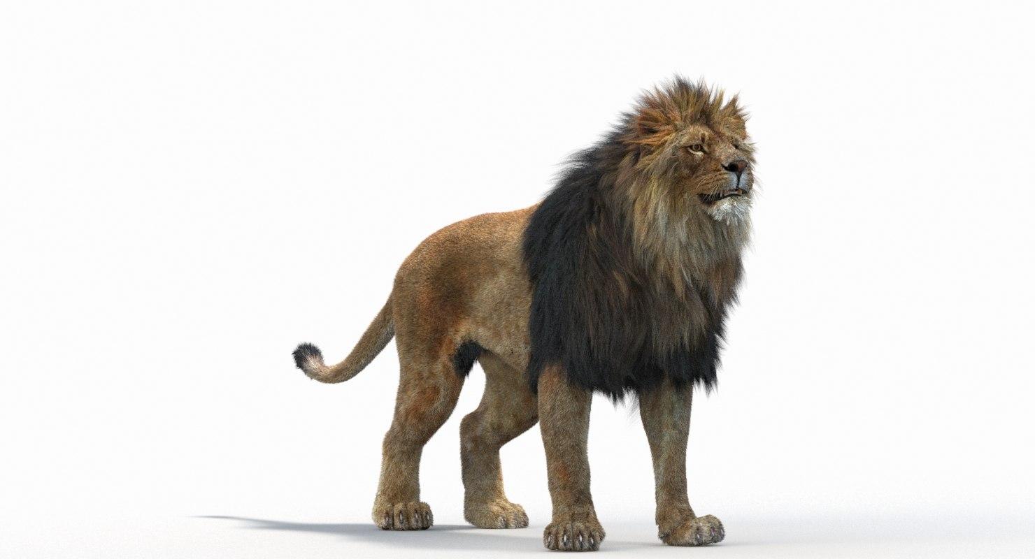 Lion_Roar_Animation0114.jpg1A6C9E48-EEA4-4F60-BF62-E37BCC2A3363Default-65.jpg