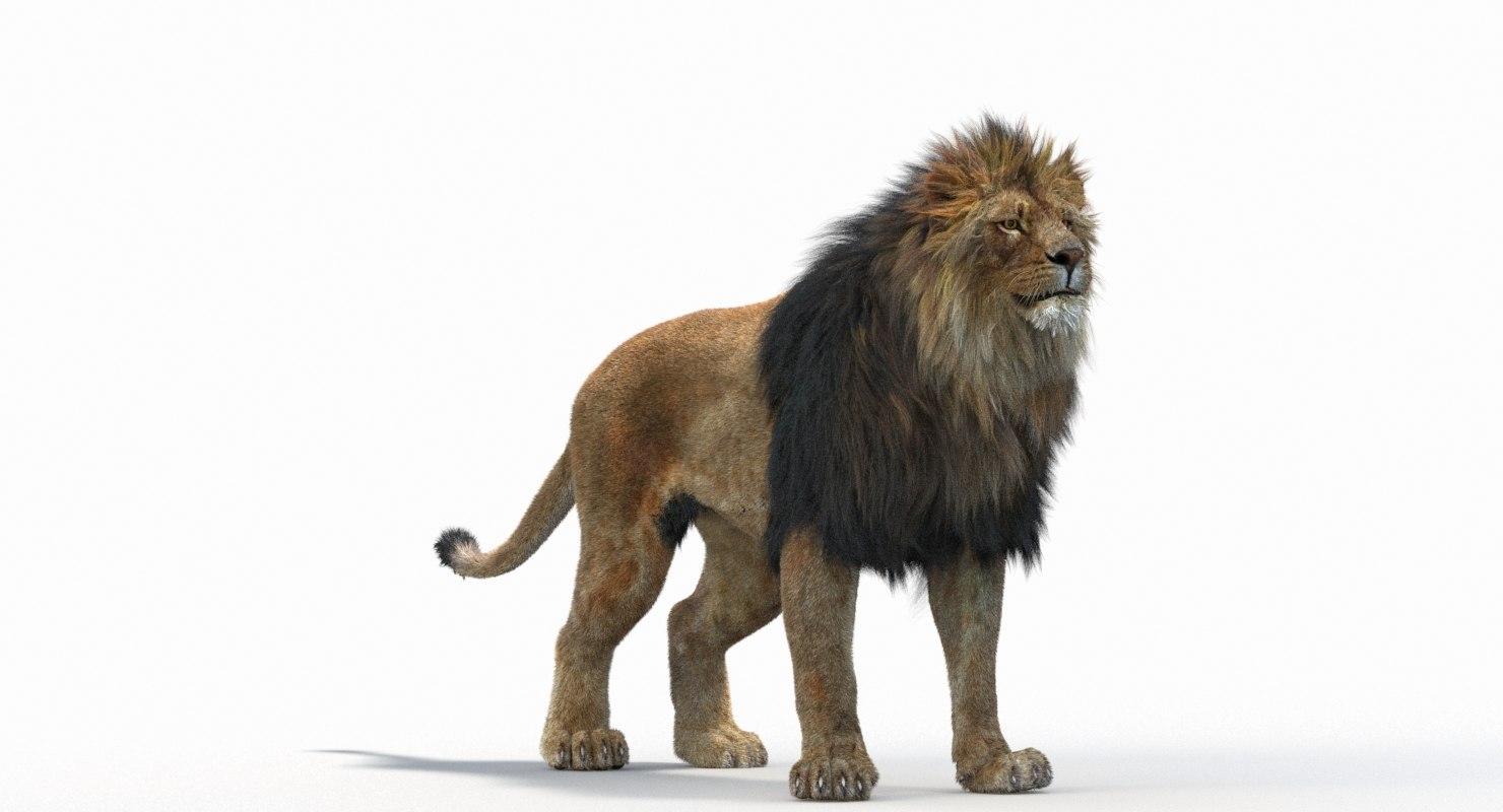 Lion_Roar_Animation0114.jpg1A6C9E48-EEA4-4F60-BF62-E37BCC2A3363Default-68.jpg