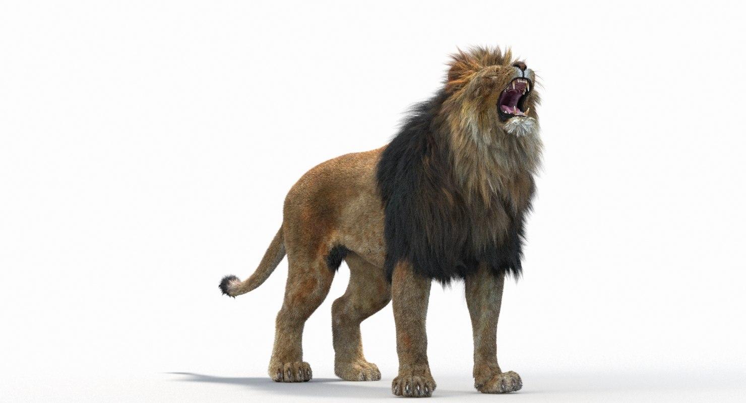 Lion_Roar_Animation0114.jpg1A6C9E48-EEA4-4F60-BF62-E37BCC2A3363Default-7.jpg