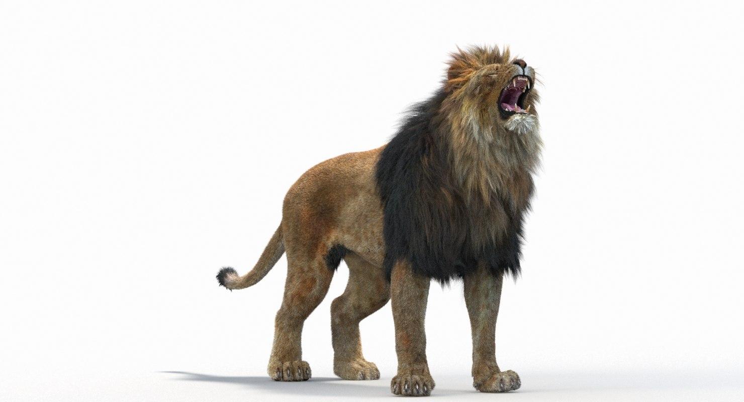 Lion_Roar_Animation0114.jpg1A6C9E48-EEA4-4F60-BF62-E37BCC2A3363Default-8.jpg