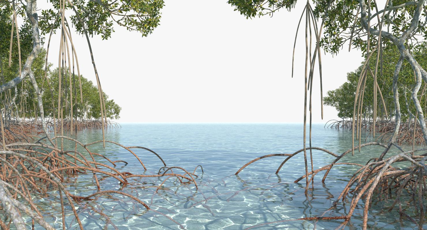mangrove animation model