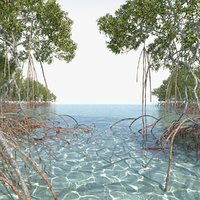 mangrove trees 3D model