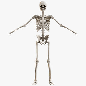male skeleton 3D