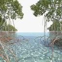 Mangroves 2.0 Animated
