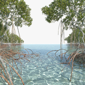 mangrove animation model