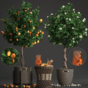 mandarin tree fruit 3D model