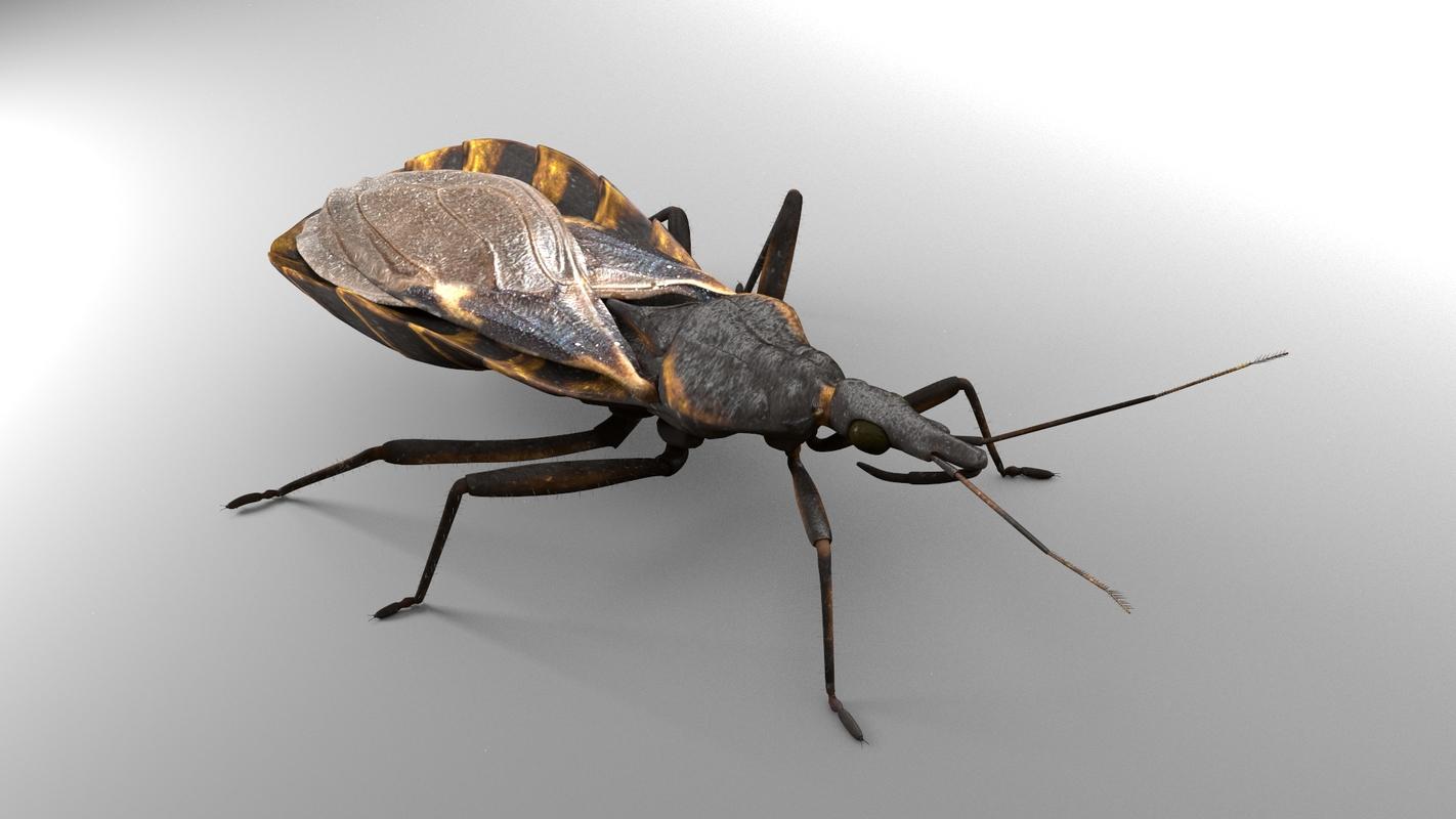 3D kissing bug