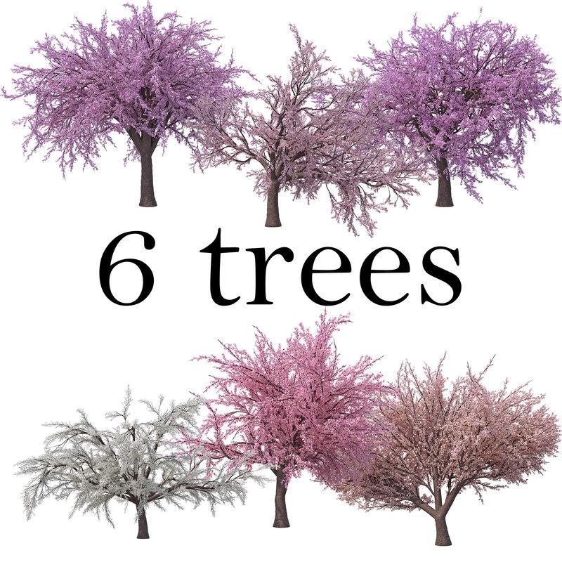 sakura cherry pack tree 3D model
