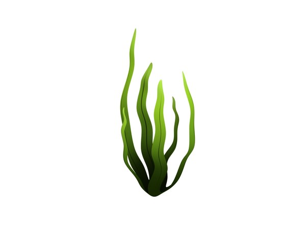 3D model seaweed cartoon