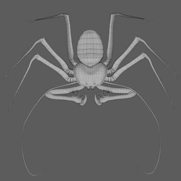 3D model amblypygi whipspider