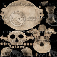 Real Human Skull 3D Scan 02 (Only Texture)