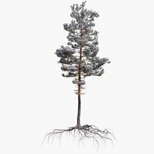 winter pine tree 10 model