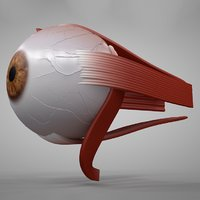 3D model eye eyeball