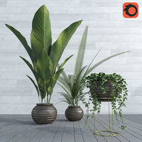 Plants collection POP01