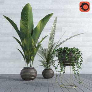 palm banana leaves 3D model
