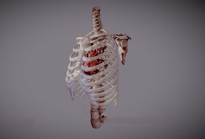 heart beating ribcage 3D model