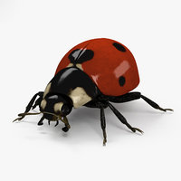 ladybird lady 3D model