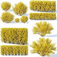 forsythia bush 3D
