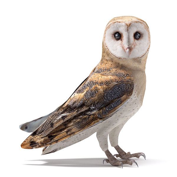 realistic owl barn 3D model