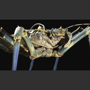 creature crab 3D