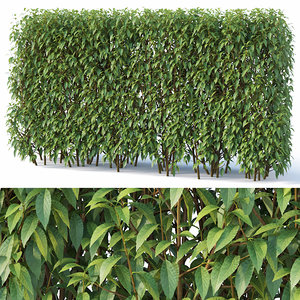 hedge cm 3D model