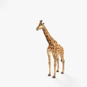 giraffe mammal animal 3D