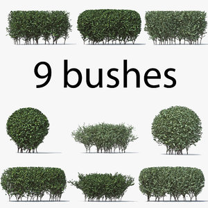3D boxwood v-ray