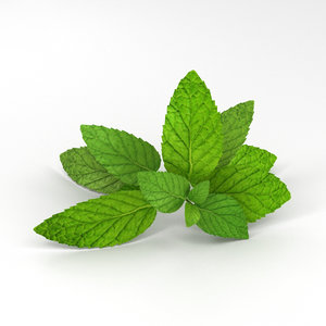 peppermint mint 3D model