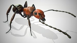 3D red ant model