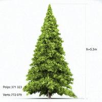 3D big spruce model