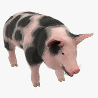 pig sow peitrain animal fur 3D