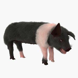 hampshire pig piglet fur 3D