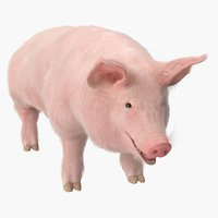 Pig Sow Landrace Rigged with Fur 3D Model