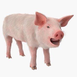 pig piglet landrace fur 3D model