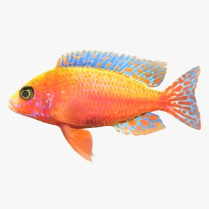 3D model red zebra cichlid