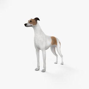3D dog greyhound animal model