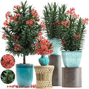 3D model nerium oleander red