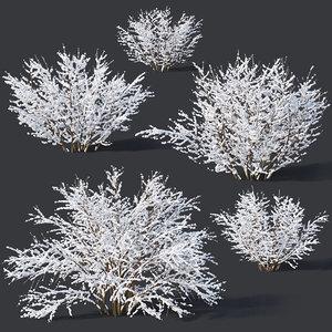 7 forsythia 3D model